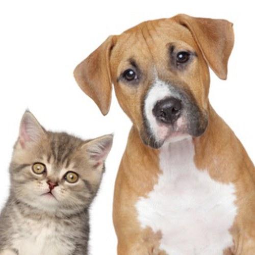 Gatto e cane primo piano