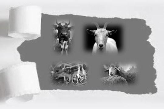 E' online il bando di ammissione alla Scuola di specializzazione in Sanità Animale, Allevamento e Produzioni Zootecniche